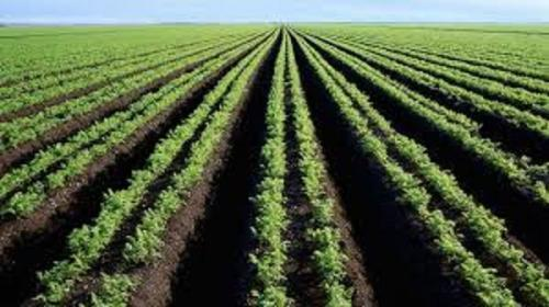 Youth urged to tap into agric value chain opportunities