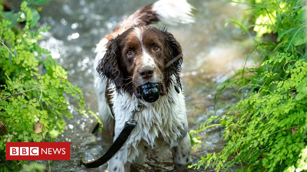 In pictures: The sniffer dogs taking on Africas poachers