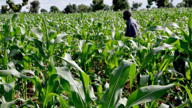 200 graduate farmers to share N74.4m in Ogun